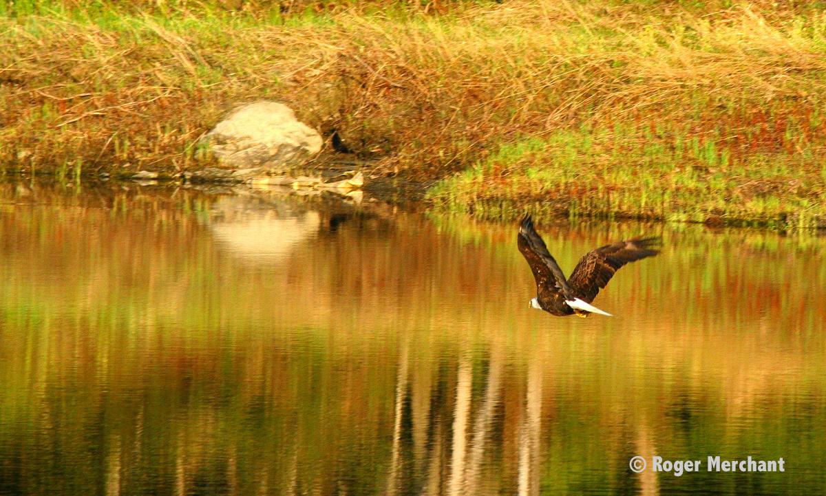 Eagle River Flight
