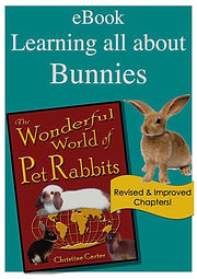 Learning all about bunnies eBook