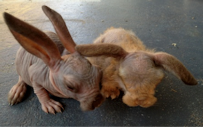 alien looking rabbits