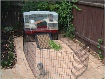 indoor rabbit hutch and playpen