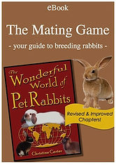 Hop into Pet Rabbit World!