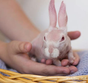 Take a hop, skip and jump into hairless rabbits!
