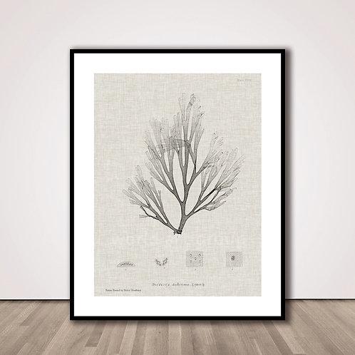 씨위드1 | Charcoal & Linen Seaweed III