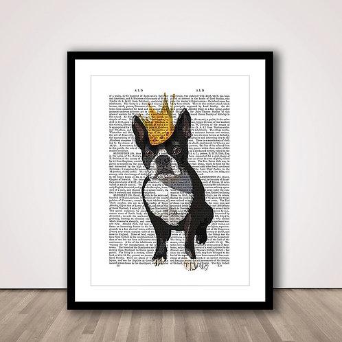 크라운 보스톤테리어 | Boston Terrier and Crown