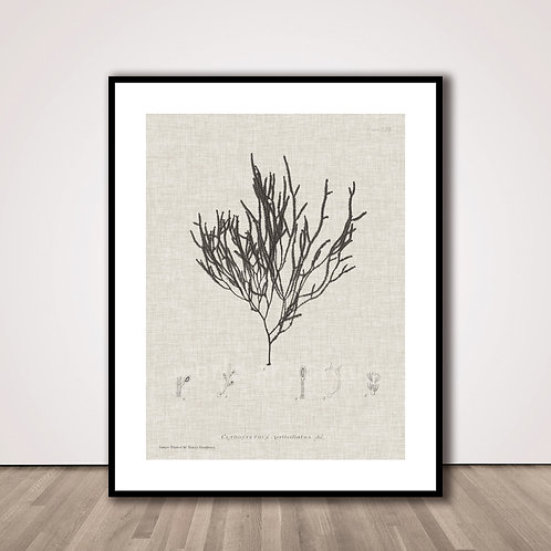 씨위드2 | Charcoal & Linen Seaweed IV
