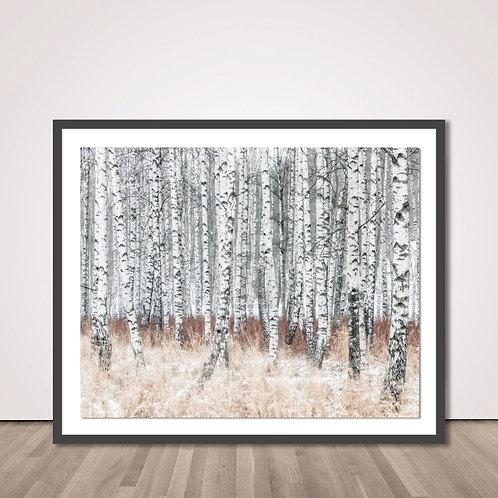실버포레스트 | The Silver Forest