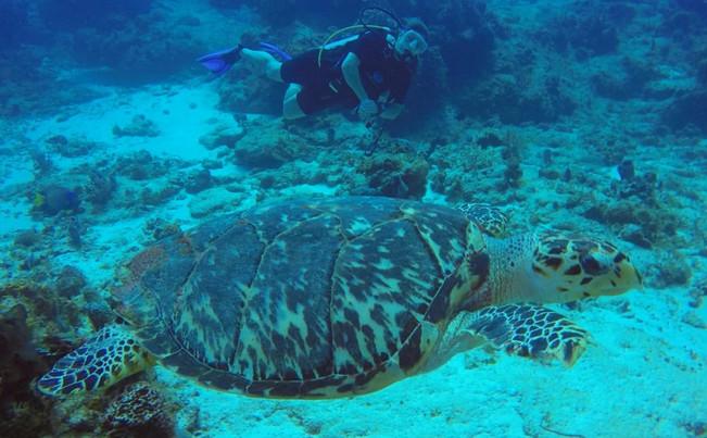 turtles7.jpg