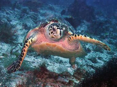 turtleportrait.jpg