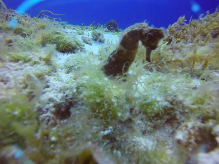 seahorse1.jpg