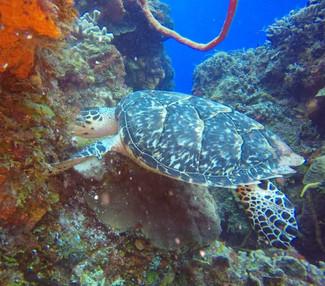 CO-diver5.jpg