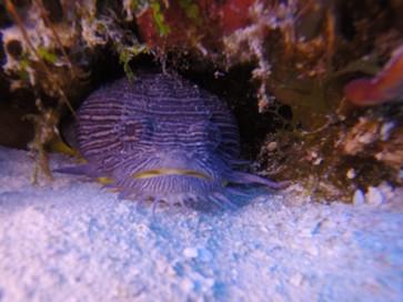CO-diver2.jpg