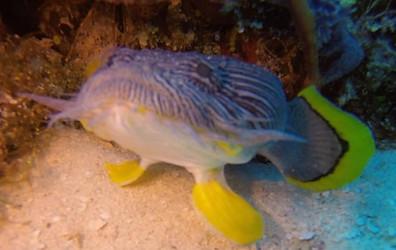CO-diver4.jpg