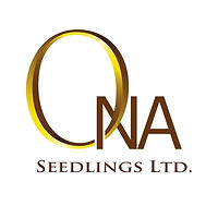 Ona Seedlings.jpg