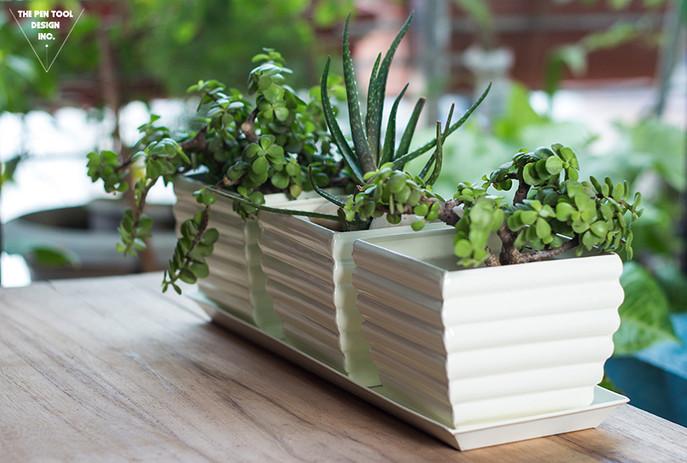 Lifestyle photography planter.jpg