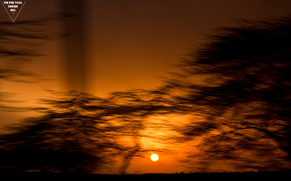 creative photography, trees, woods, sun, orange, slow shutter speed