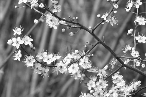 bloemen.jpg