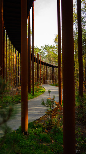 Cycling Through the Trees  – Hechtel-Eksel