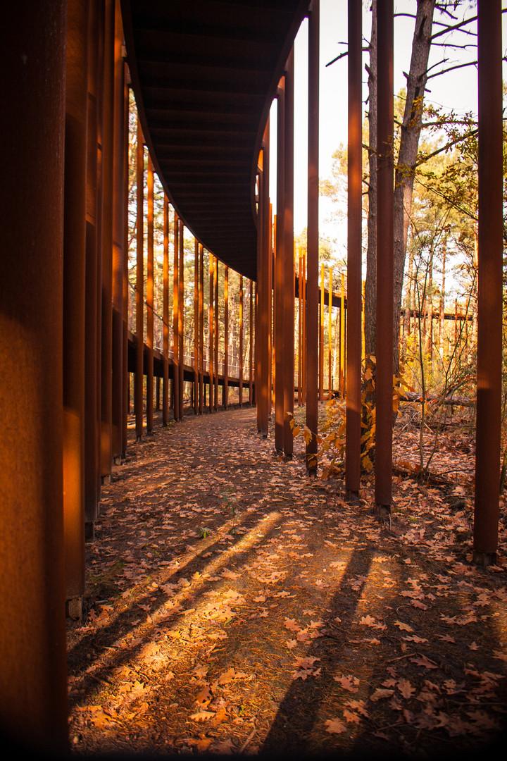 Fietsen door de bomen – Hechtel-Eksel