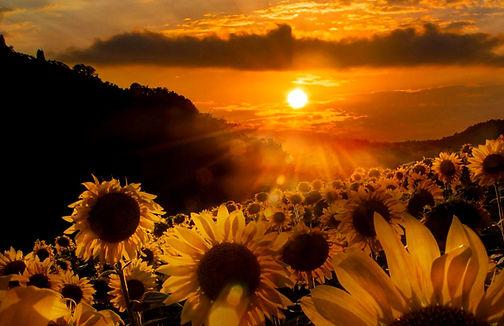 flowers-sunflowers-pretty-nature-sunrise-flower-wallpaper-in-hd.jpeg