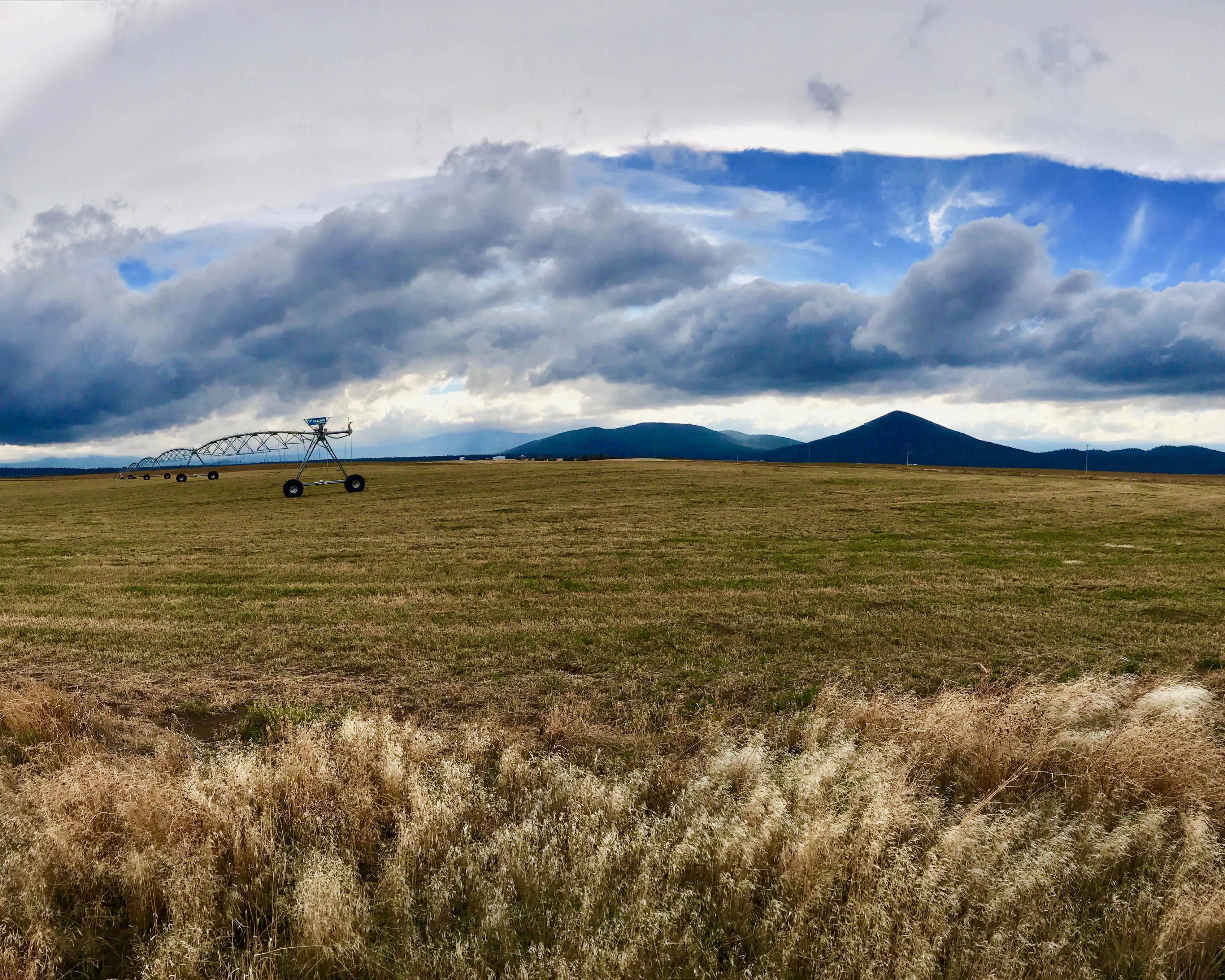 RHC hay field 2