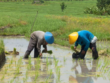 Oxfam in Sri Lanka Insures Farmers With Blockchain-Based Agricultural Insurance