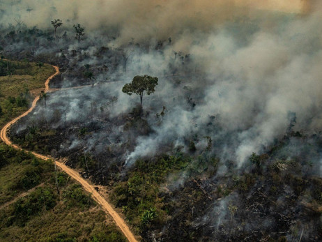 Crypto and Blockchain Helps Saving the Amazon Rainforest by a US Foundation