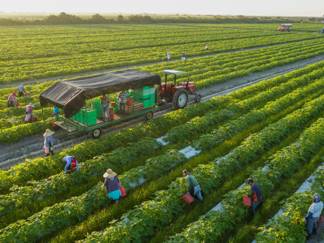 Agriota E-Marketplace To Give Farmers In India More Access To The UAE's Multi-Billion Dollar Food In