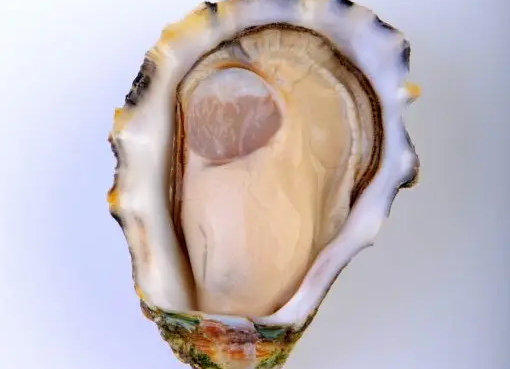 Oysters - Pacific Open