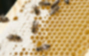 Close up view of the working bees on hon