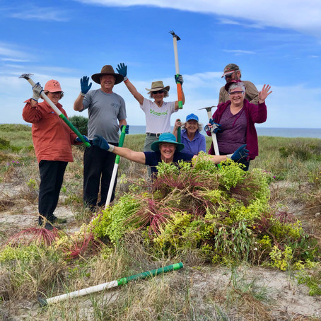COVID-19 Update and Taperoo Dunes Group