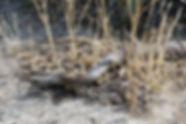 Brown Snake 18A6561-11-02.jpg