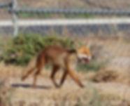fox 17A7085-11-22.jpg