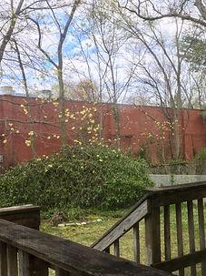 backyardphoto.jpg