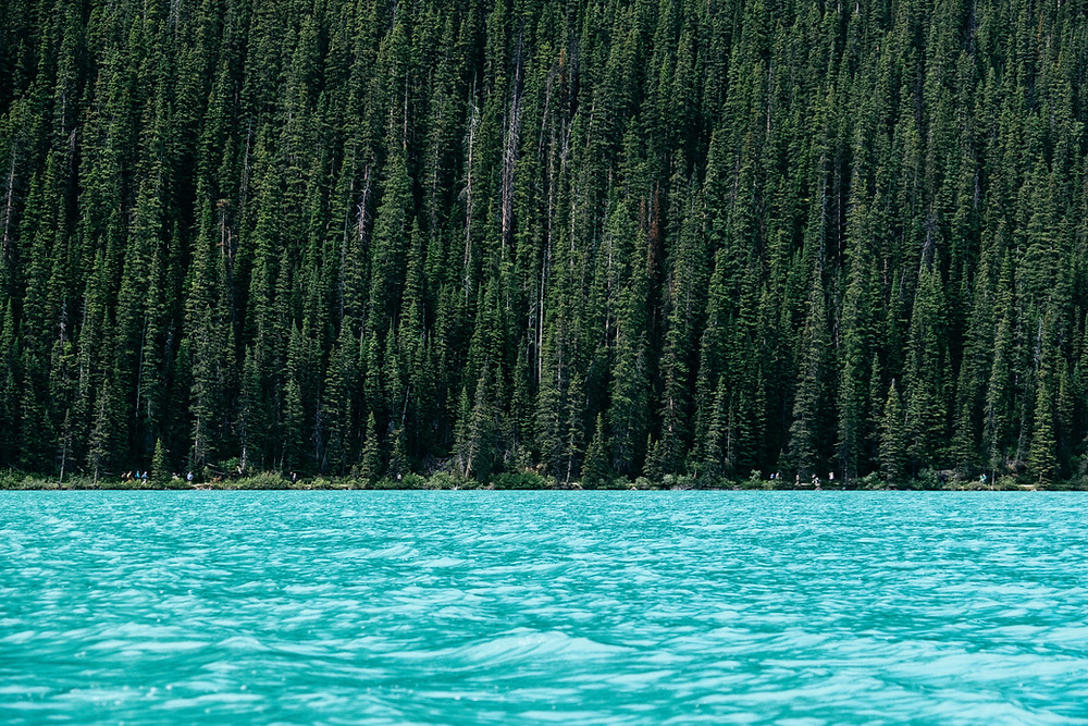 Beautiful turquoise water and a lush green forest