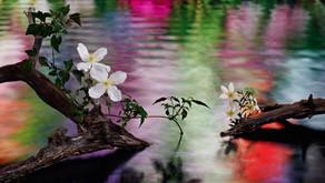"Van Cleef & Arpels  期間限定エキシビション""LIGHT OF FLOWERS ハナの光""/作編曲"