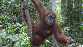 Top 5 Borneo Wildlife Experiences