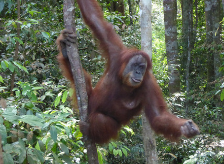 Top 5 Borneo Wildlife Experiences