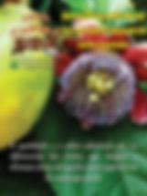 capa 74.jpg