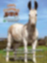 A edição 38 de agosto da melhor revista de agronegócios do Brasil você encontra em: www.revista100porcentocaipira.com.br