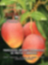 A edição 32 de fevereiro da melhor revista de agronegócios do Brasil você encontra em: www.revista100porcentocaipira.com.br