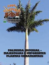A edição 31 de janeiro da melhor revista de agronegócios do Brasil você encontra em: www.revista100porcentocaipira.com.br