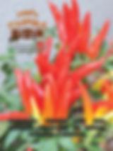 A edição 39 de setembro da melhor revista de agronegócios do Brasil você encontra em: www.revista100porcentocaipira.com.br