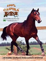 A edição 20 de fevereiro da melhor revista de agronegócios do Brasil você encontra em: www.revista100porcentocaipira.com.br