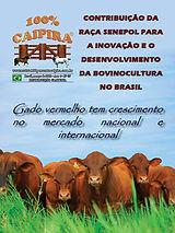 A edição 57 de março da melhor revista de agronegócios do Brasil você encontra em: www.revista100porcentocaipira.com.br