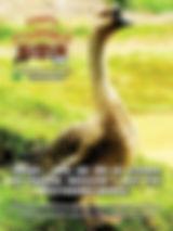 A edição 36 de junho da melhor revista de agronegócios do Brasil você encontra em: www.revista100porcentocaipira.com.br