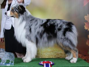 1st Limit Dog & DCC