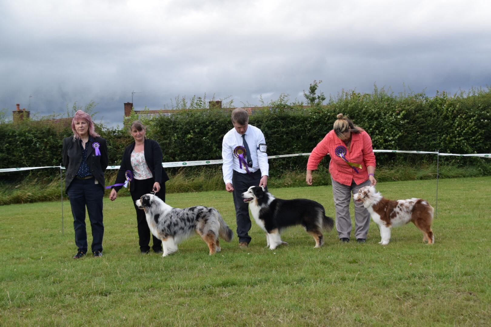 Best Dog, Reserve Best Dog/Best Veteran Dog, Best Puppy Dog