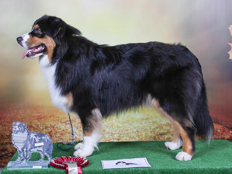 1st Puppy Dog