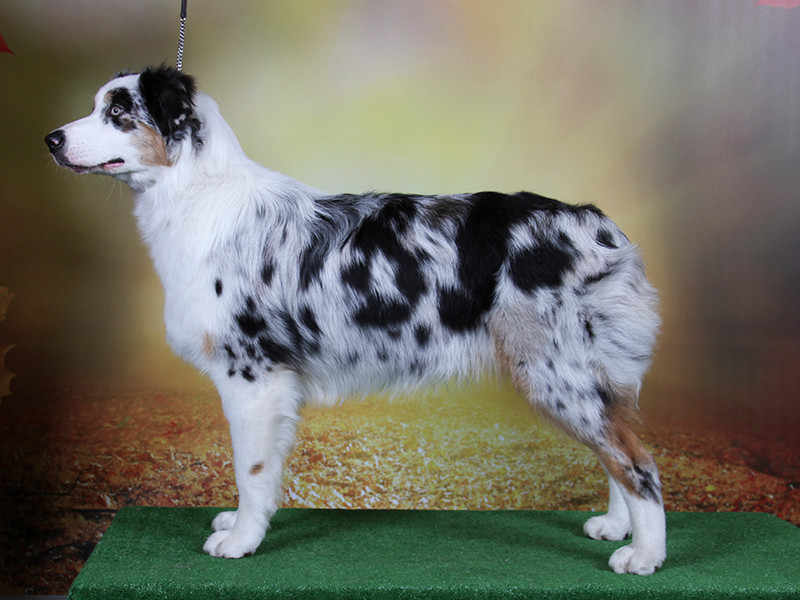 1st Minor Puppy Bitch