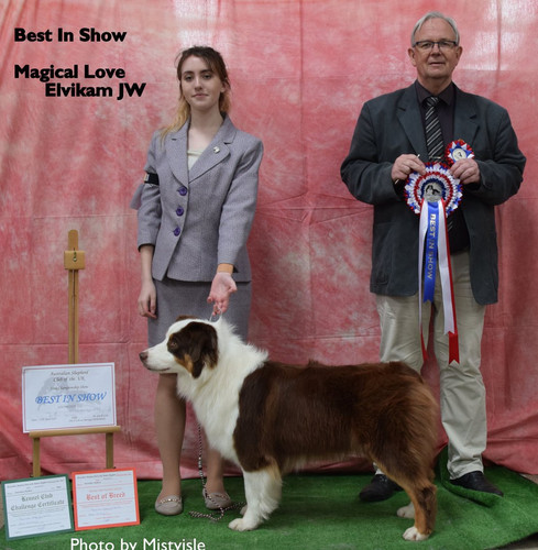 Best In Show & BCC